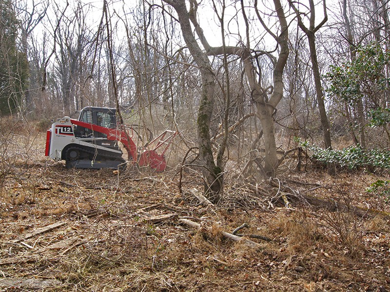 Using a bobcat to clear overgrowth.