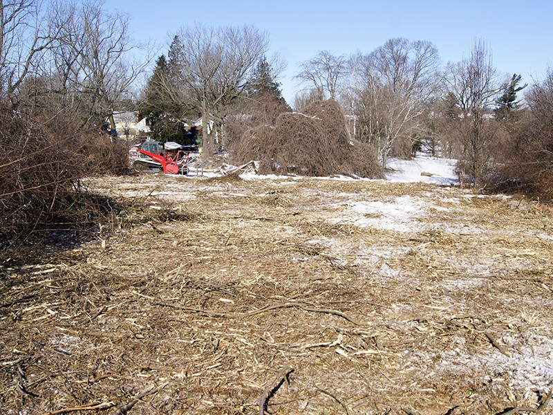 Clearing invasive and overgrown areas