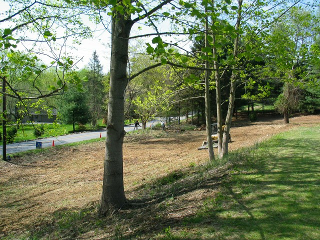 Replanting following invasive removal