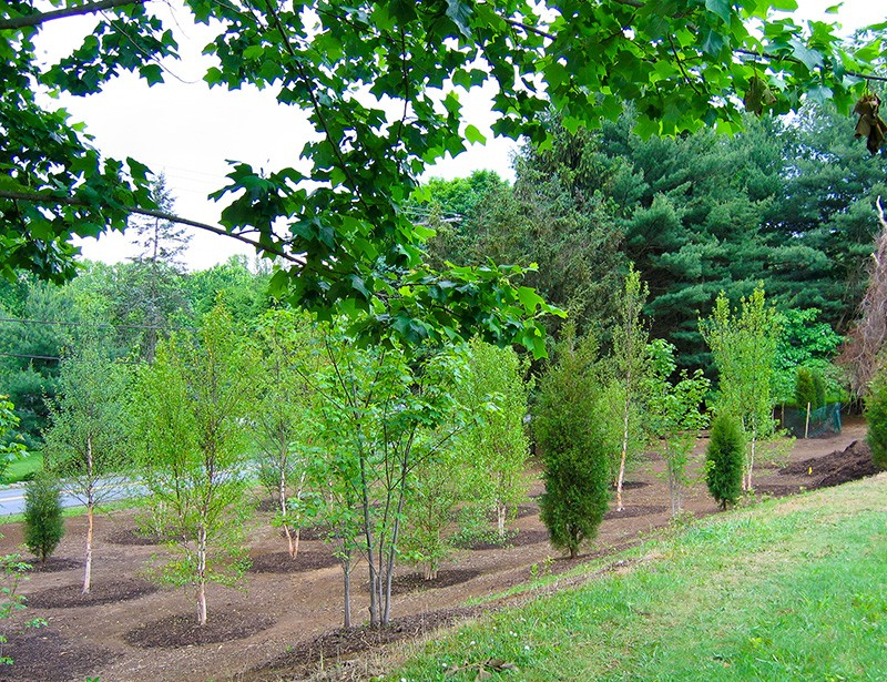 Replanting after clearing invasive and overgrown plants
