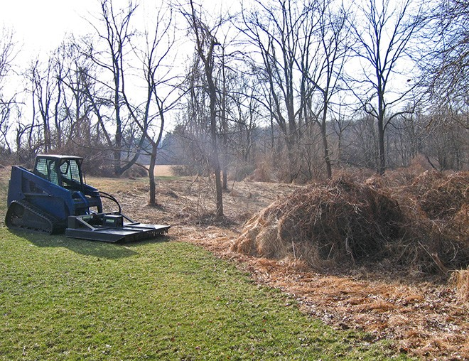 Removing invasive species improves the local environment and enhances your property
