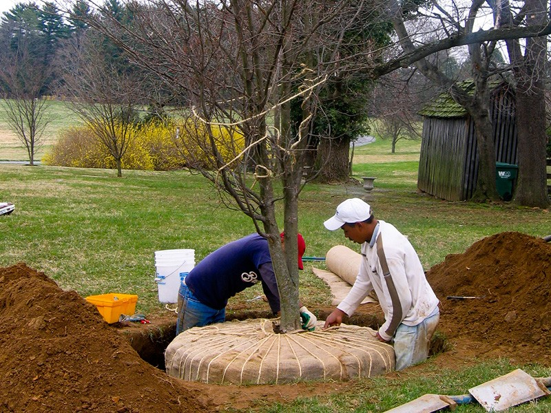 wrapping roots for transplating